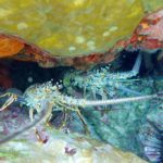 St. John Underwater