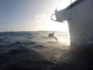 BVI Bareboat Charter