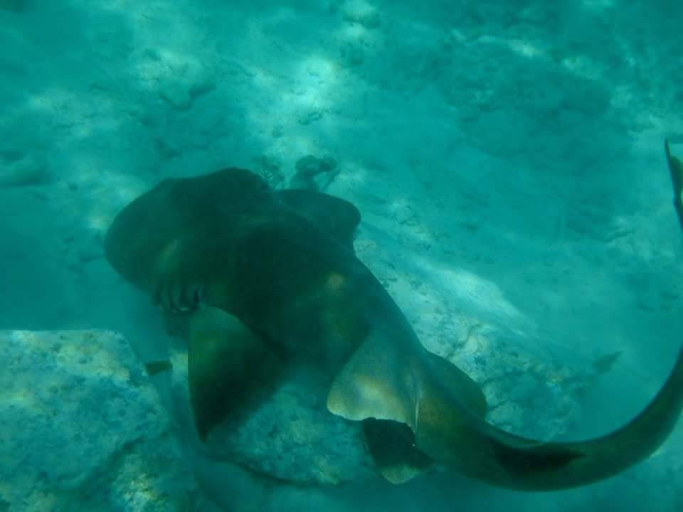 Busy-Bee-Charters-Nurse-Shark