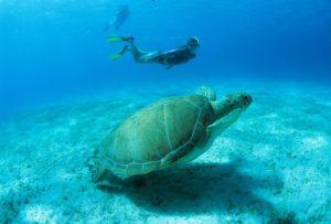 Steve-Simonsen-Snorkeler-Turtle-1