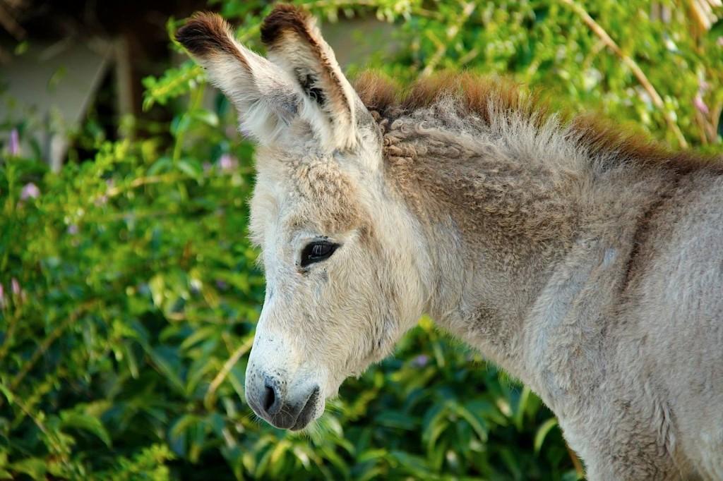 Baby-Donkey-photo-WTS