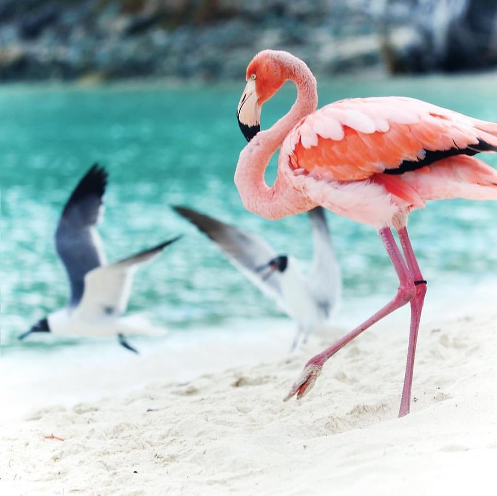 Flamingo-photo-WTS