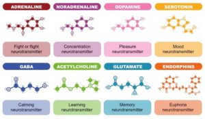 types-of-neurotransmitters_med