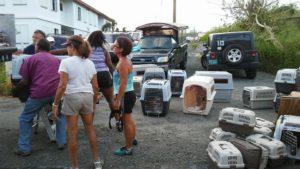 Hurricane Irma and Maria Pet Evacuation