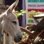 Coral Bay Donkey