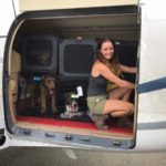 Island Dog Rescue