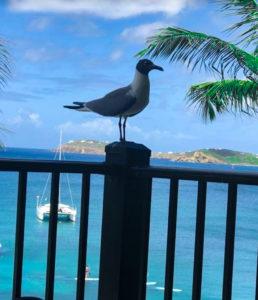 St. Thomas bird