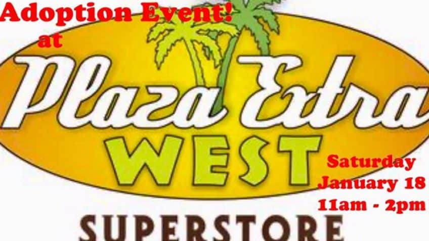 Adoption Event at Plaza Extra West