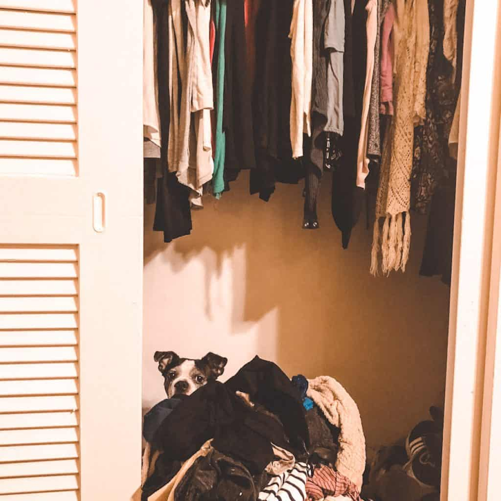 Messy closet with dog, What To Do VI